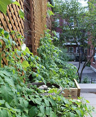 Chic Resto Pop - Jardin communautaire